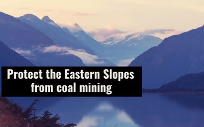 Albertans Deserve Meaningful Consultation on Coal Policy
