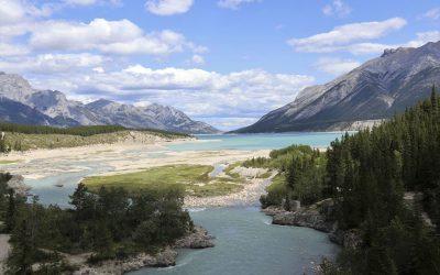 Alberta government knew bighorn sheep contaminated with coal-mine selenium: scientist