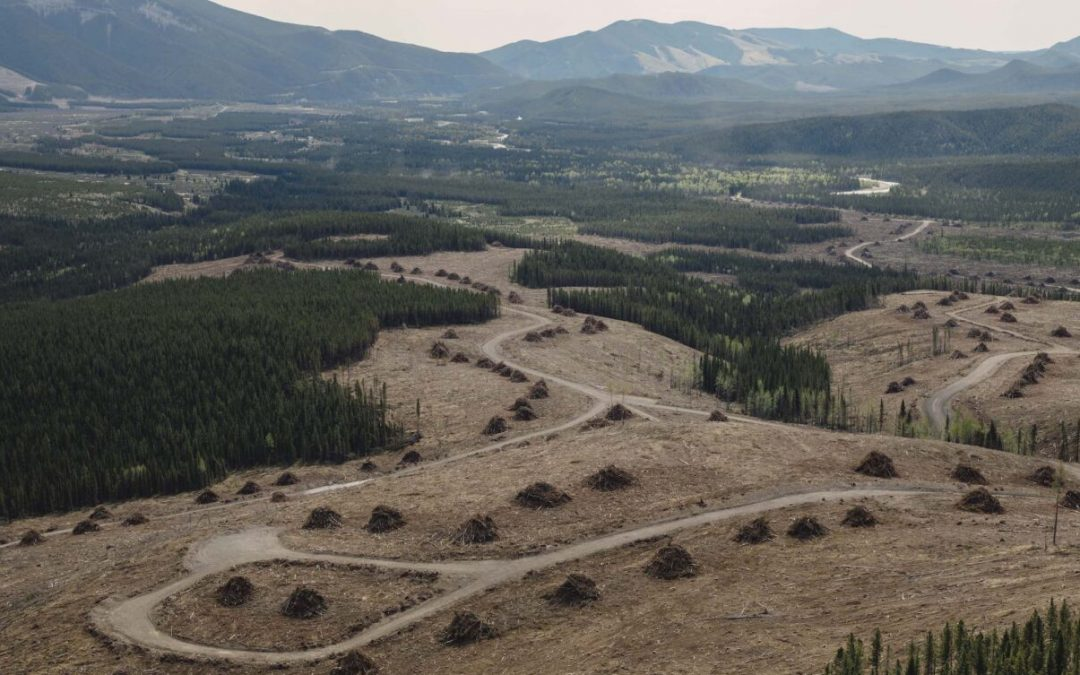 A bird's eye view of coal leases on the eastern slopes of Alberta's Rockies